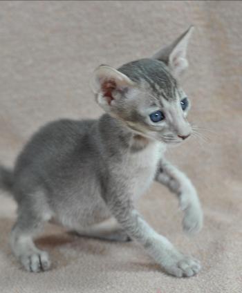 purina one cat